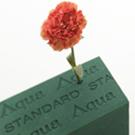 「アクアフォーム」のサムネイル画像